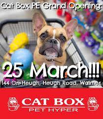 Hyper Dog Meme - port elizabeth are you ready cat box pet hyper facebook