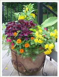 Summer Container Garden Ideas Moss Gardens Ideas Colors Combos Container Gardens