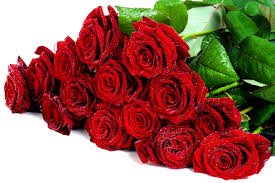 roses 30833 flowers photo flowers