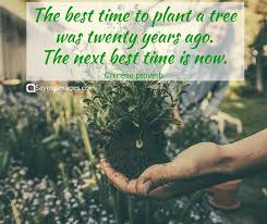 25 best tree quotes word quotes quotes quotes