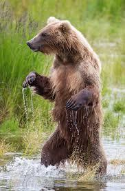 California Flag Bear The Bear Flag Story Goldfields