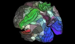 The Anatomy Of The Human Brain The Map Of The Human Brain Is Finally Getting More Useful Mit