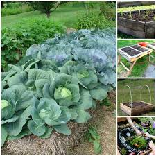 20 brilliant raised garden bed ideas you can make in a weekend