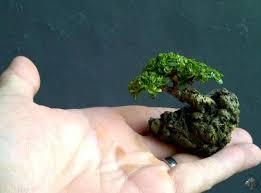 top 10 smallest bonsai trees bonsai empire