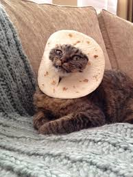 Cat In Bread Meme - breading costume