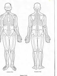 gallery blank anatomical body charts human anatomy diagram