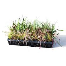 ornamental grass tray from santa rosa gardens ornamental