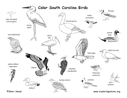 South Carolina birds images South carolina habitats mammals birds amphibians reptiles jpg