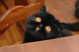 hey guys a cat album on imgur