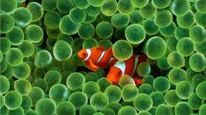 wallpaper ikan bergerak untuk pc 20 wallpaper bawah laut terbaru bangiz