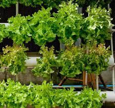 Patio Vegetable Garden Ideas 13 Creative And Innovative Rain Gutter Garden Ideas The Self
