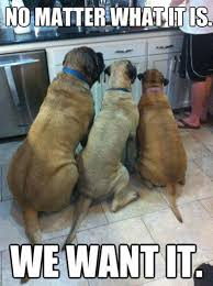 Dog Cooking Meme - funny dog pic dogs like your cooking even if it s in the