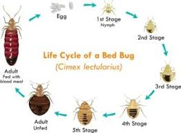 Can Bed Bugs Live On Cats How To Get Rid Of Bed Bugs Tuck Sleep
