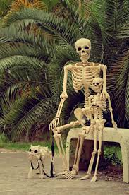 Skeleton For Halloween by You Know You Want One Hyper Real Dog Skeletons For Halloween