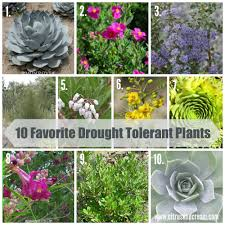drought tolerant plants are a necessity when planning a central