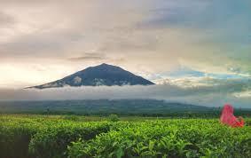 Teh Kayu Aro turun muncak dan kebun teh kayu aro 3 s journey