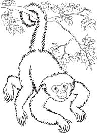 download spider monkey coloring page ziho coloring