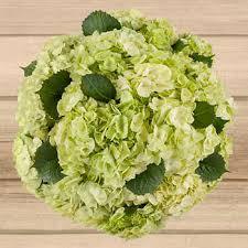 bulk hydrangeas bulk flowers costco