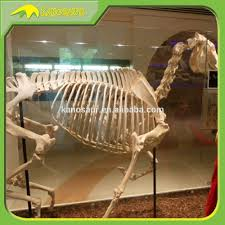 Halloween Horse Skeleton by Horse Skeleton Horse Skeleton Suppliers And Manufacturers At