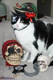 Animal Halloween Costumes 56 Roundup Cat Halloween Costumes Images
