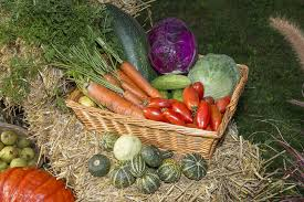free photo autumn festival vegetables thanksgiving fruits max pixel
