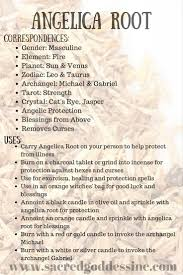 Kitchen Collection Coupon Codes Magick Herb Angelica Root 2