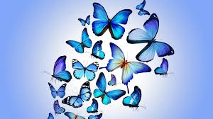 download wallpaper 1920x1080 butterfly colorful blue drawing