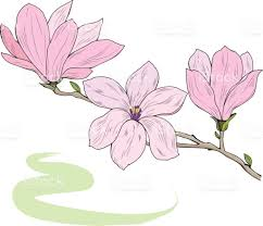 magnolia flowers on a tree branch sketch vector illustration stock