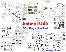 free printable worksheets vertebrates invertebrates animal unit vertebrate invertebrate animals worksheet packet 50
