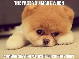 Puppy Face Meme - puppy dog face memes memes pics 2018