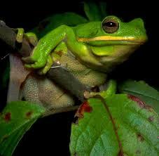 frog wallpaper free wallpapersafari