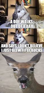 Dog Lawyer Meme - bad pun dog bad pun dog pinterest bad pun dog pun dog and