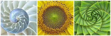 golden ratio dna spiral the golden ratio chloe farmery