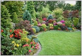 outdoor yard plants