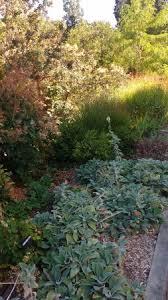 summerland ornamental gardens picture of summerland ornamental