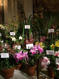 top tables that wow the 2017 nybg orchid dinner u2014 www