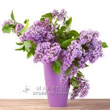 online get cheap lilac bush aliexpress com alibaba group