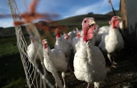 why is turkey cheaper around thanksgiving pacific standard