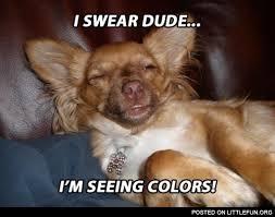 High Dog Meme - littlefun stoner dog i swear dude i m seeing colors