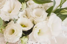 Lisianthus Delicate White Lisianthus Flowers Photograph By Sandra Foster