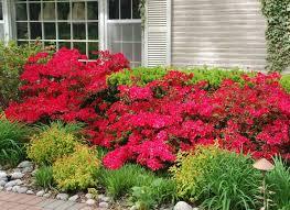 Bushes For Landscaping Front Yard Front Landscape Bushes Landscaping Shrubs Ideas Using