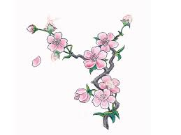 pink cherry blossom wallpaper tattoos