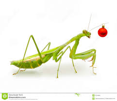 australian christmas red ornament insect stock photo image 3234686