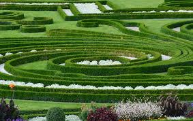 terrace gardening free images landscape grass lawn flower park botany