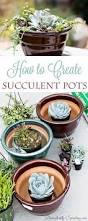 best 20 potting succulents diy ideas on pinterest succulents