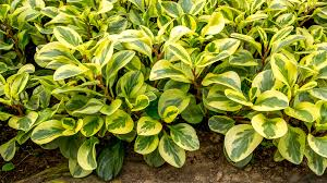 house plants that are safe for your pets u2013 indigo skye group