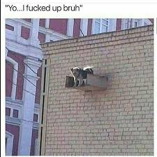 Yo Dog Meme - 32 dog memes that will cure your bad day