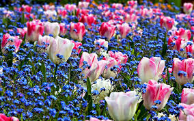 spring flowers wallpapers spring flowers full high resolution