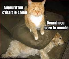 Meme Chat - meme chat chien tuer aujourdhui c etait le chien demain ce sera le