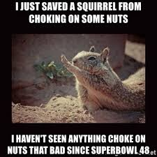 Dramatic Squirrel Meme - i just saved a squirrel from choking on some nuts i haven t seen